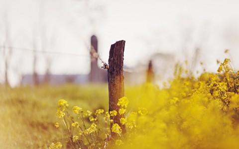 可爱的黄花壁纸