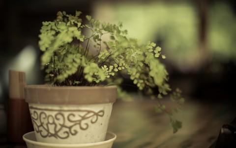 漂亮的花盆壁纸