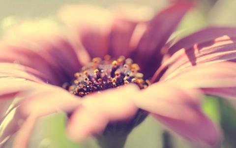漂亮的花的照片