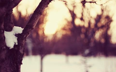美丽的自然树枝壁纸