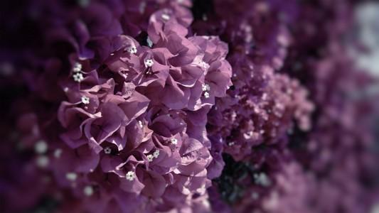 美丽的异国花朵壁纸
