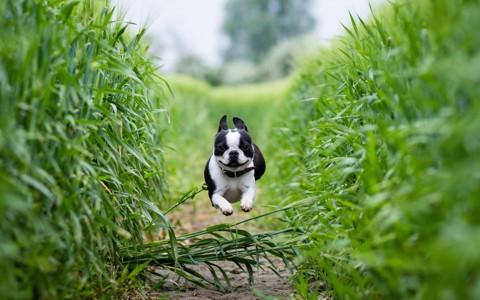 令人敬畏的狗自然壁纸