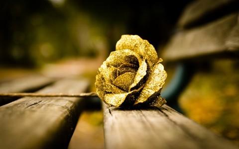 美妙的金玫瑰壁纸