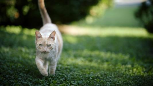 猫自然壁纸