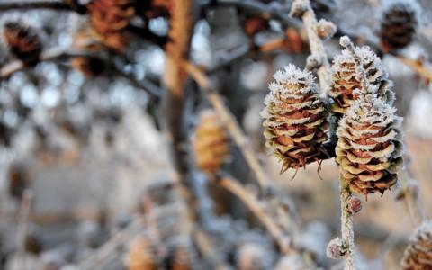 奇妙自然树枝壁纸