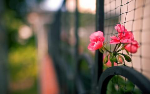 漂亮花栅栏壁纸