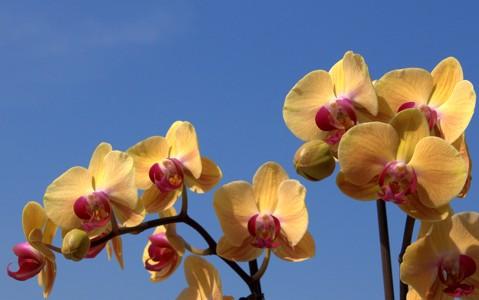 兰花的花壁纸