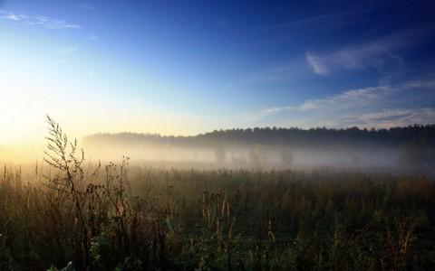 清晨的草原风光