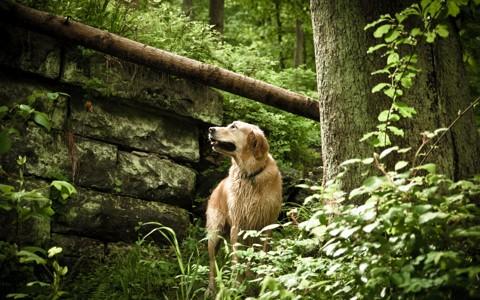 美丽的狗自然壁纸