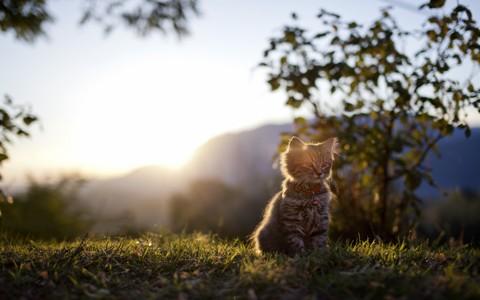 可爱的猫自然壁纸
