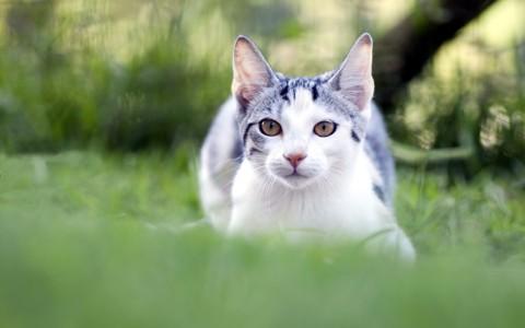 猫自然壁纸高清