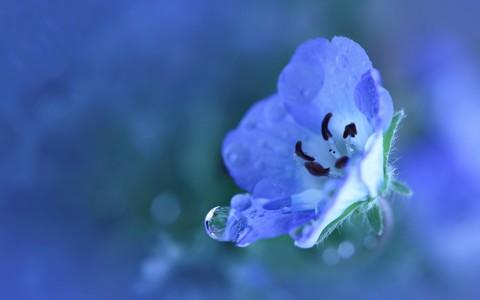 漂亮蓝花壁纸