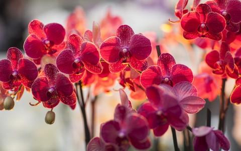 兰花花壁纸高清