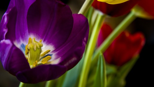 紫色的花壁纸