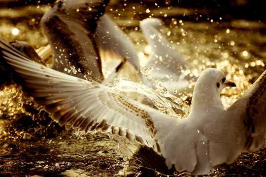 海滨白色海鸥图片