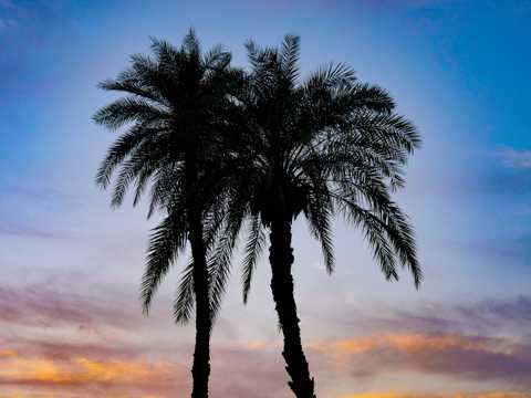 日落余晖棕榈树