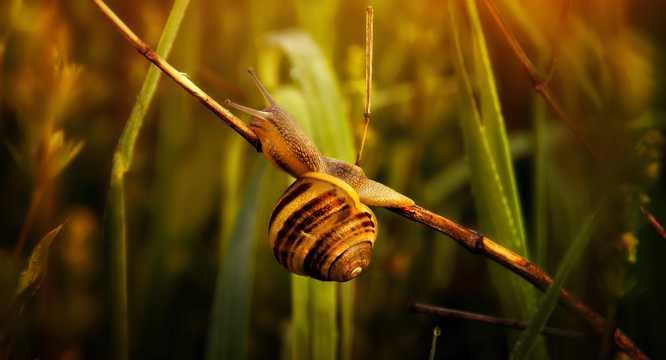 树叶上的蜗牛高清图片