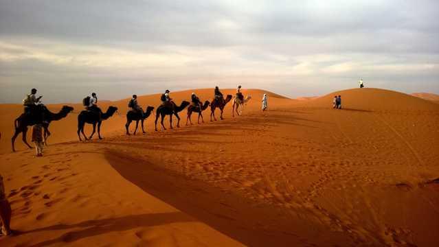 大漠中成群的骆驼图片