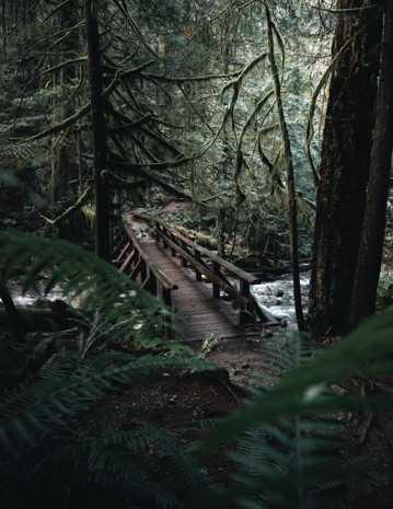 树林风光图片