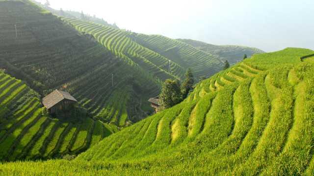 水稻梯田景色图片