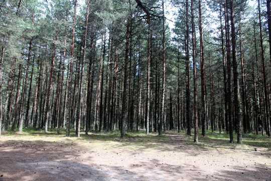 丛林树木景观图片