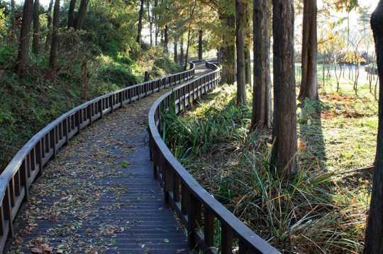 公园枯叶光景图片