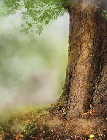 高清梦幻树林图片