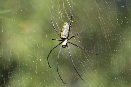 室外蜘蛛蛛网