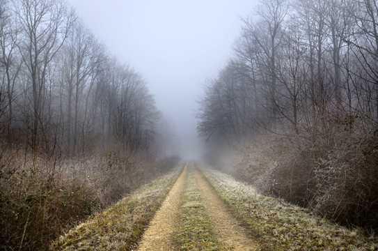 冬天树林山路景观图片