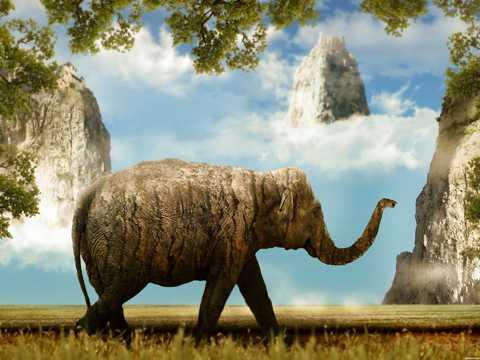神话大象图片