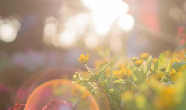 早晨春光图片