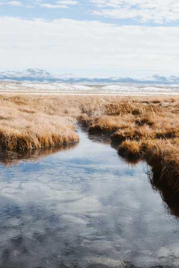 芦苇河岸景物图片