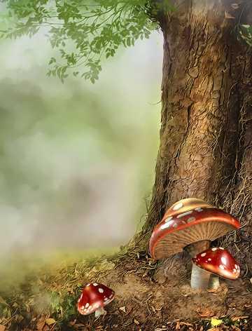 高清梦幻森林图片