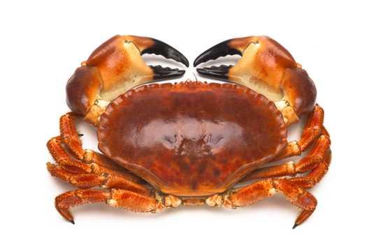 大闸蟹高清图片