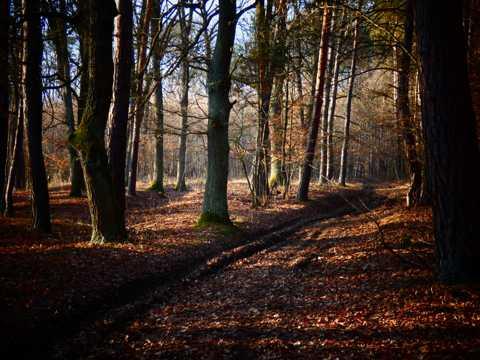 秋日树叶森林自然风光图片