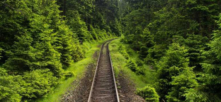 穿过丛林的铁轨图片