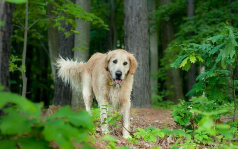 湿的狗在森林里