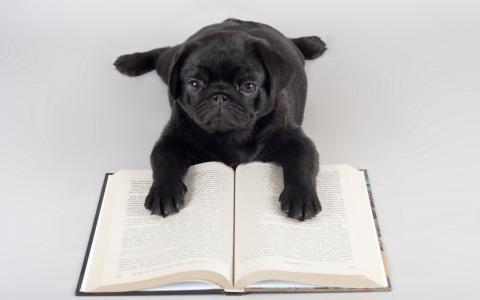 帕格读一本书