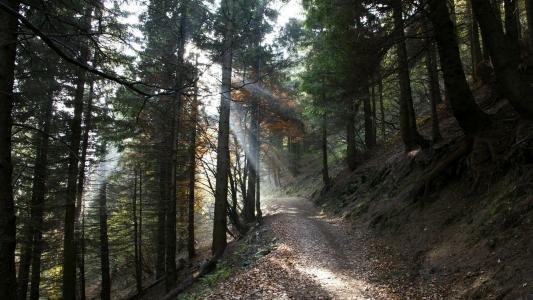 阳光照耀在森林里