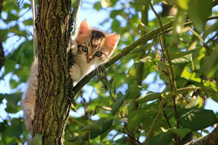 会爬树的小猫
