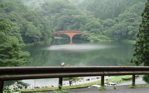 在森林里的红色桥梁