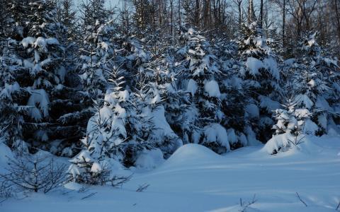 冬天在森林里