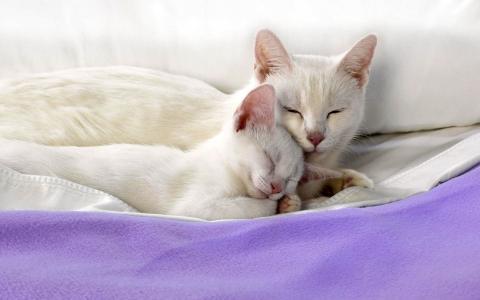 猫和小猫睡觉