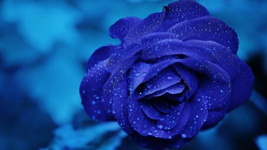 深受少女喜爱的蓝色妖姬
