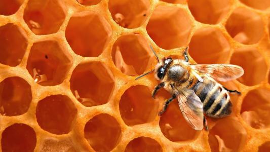 蜜蜂在蜂窝上