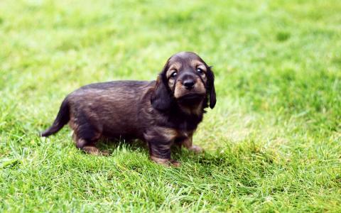 可爱的小狗在草地上
