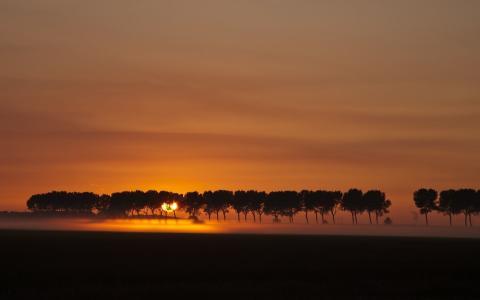 夕阳穿过树林