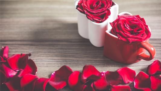 微距镜头下的浪漫红玫瑰