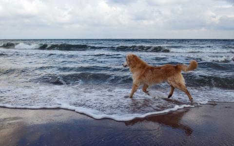 狗在沙滩上