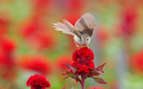 在花上的小鸟